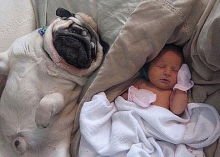 Cách phòng tránh chó cắn cho trẻ, cach phong tranh cho can cho tre